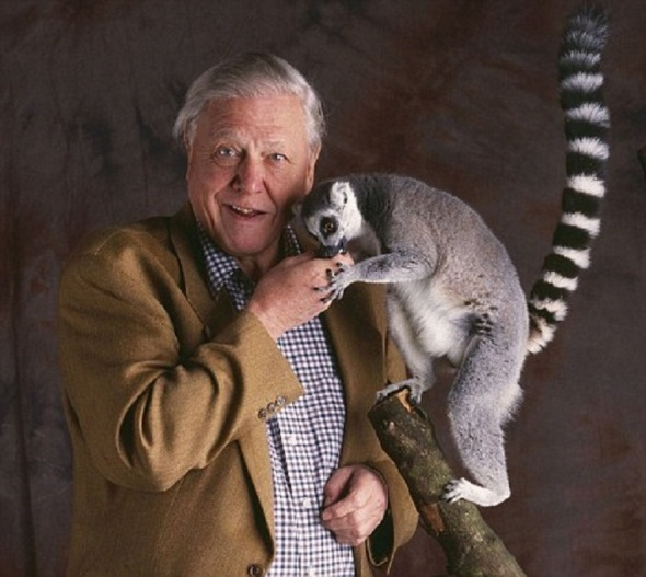 Picture shows: David Attenborough.   (c) BBC TX: BBC Radio 4, Saturday 6th May 2006  An Archive Hour celebrating Sir David Attenborough's natural history broadcasting career as he approaches his 80th birthday.  David Attenborough's name is synonymous with the natural world around us, across 50 years he has appeared on our television screens broadcasting from more far-flung corners of the globe than perhaps the most seasoned of news journalists.    Warning: Use of this copyright image is subject to Terms of Use of BBC Digital Picture Service.  In particular, this image may only be used to publicise THE ARCHIVE HOUR: WILD TIMES - DAVID ATTENBORUGH AT 80 and provided the BBC is credited. Any use of this image on the internet or for any other purpose whatsoever, including advertising or other commercial uses, requires the prior written approval of the BBC.